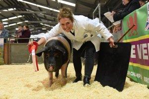 Pig show - Smallholding & Countryside Festival