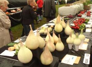 giant onions at anglesey agricultural show
