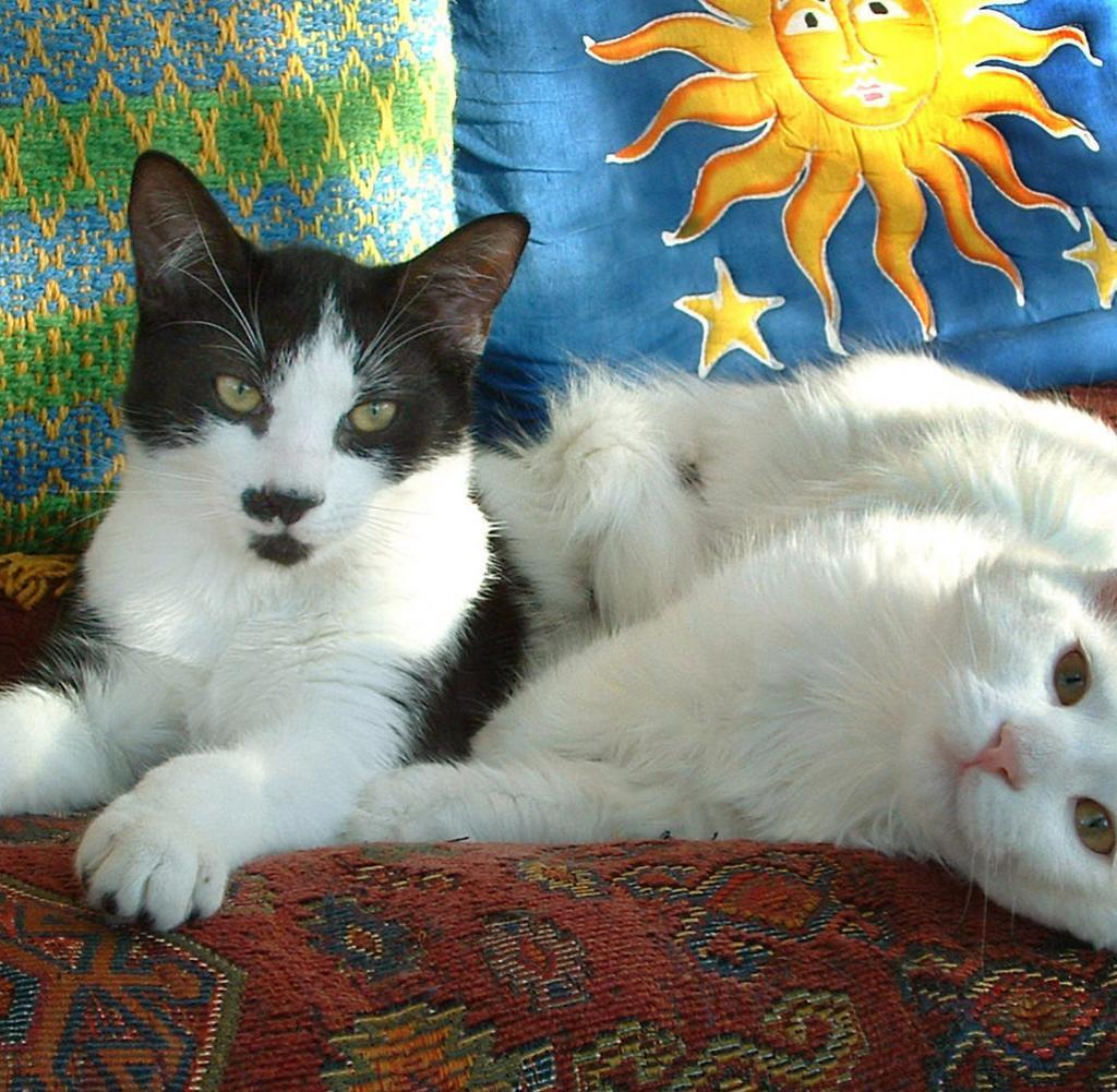 Tierpsychologie Wenn Die Katze Plötzlich Eine Vollmeise Hat