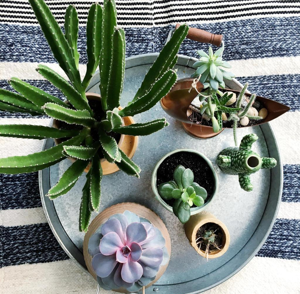 Experten Tipps Zehn Zimmerpflanzen Herrlich