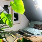 Experten Tipps Zehn Zimmerpflanzen Die Herrlich Anspruchslos Sind Welt