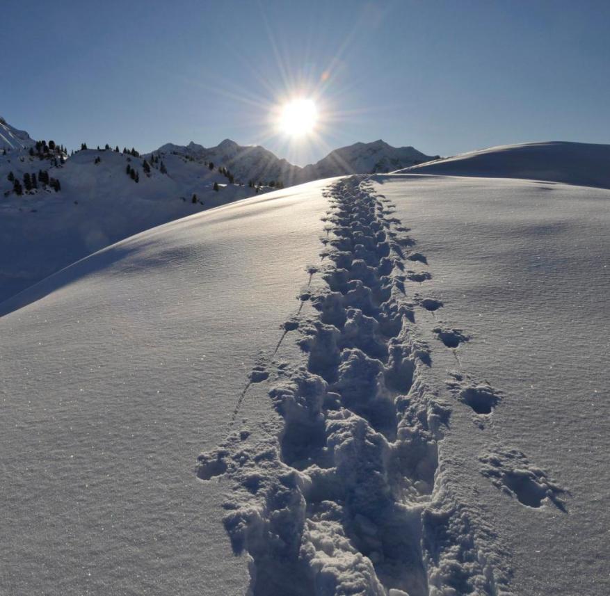 Österreich: Auf dem Tannberg ist der Schnee meterhoch und Wintersportler haben eine tolle Aussicht