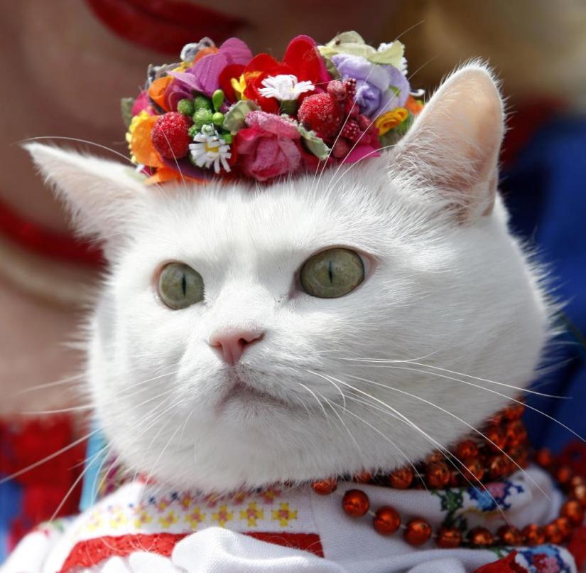Kiev (Ukraine): Even this cat was traditionally dressed for the Vyshyvanka festival