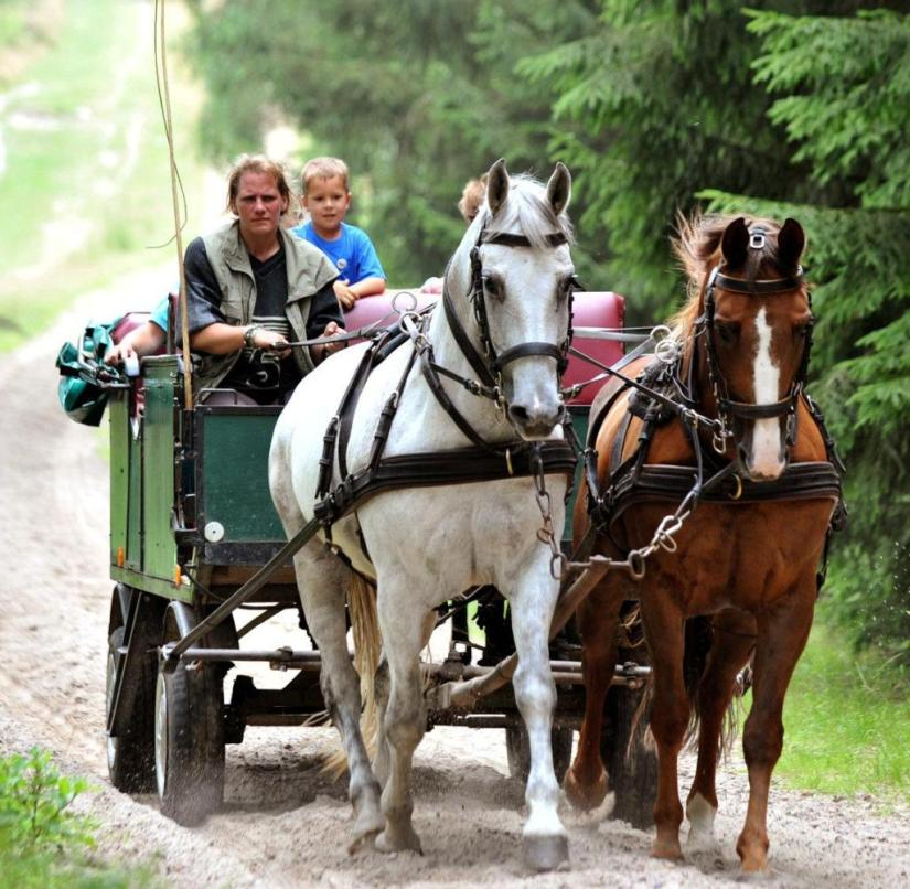 In the Carriage In the lüneburg Heath, such trips are especially popular
