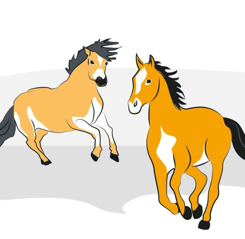 Wild horses on Gotland (Sweden)