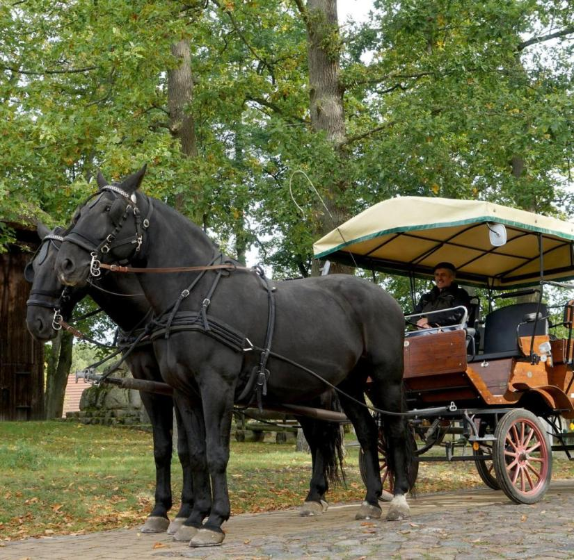 Brandenburg: Coach driver Jürgen Strache sits in the wagonette that pulls the geldings Chico and Hercules through the Ruppin lake landscape