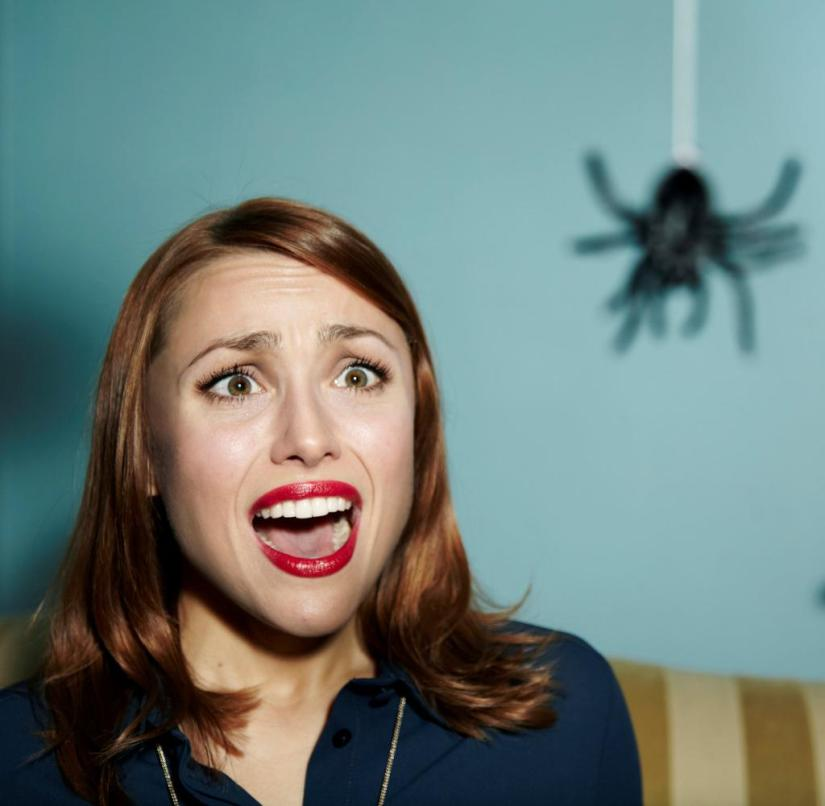 Spiders: Likely time to meet them in the apartment