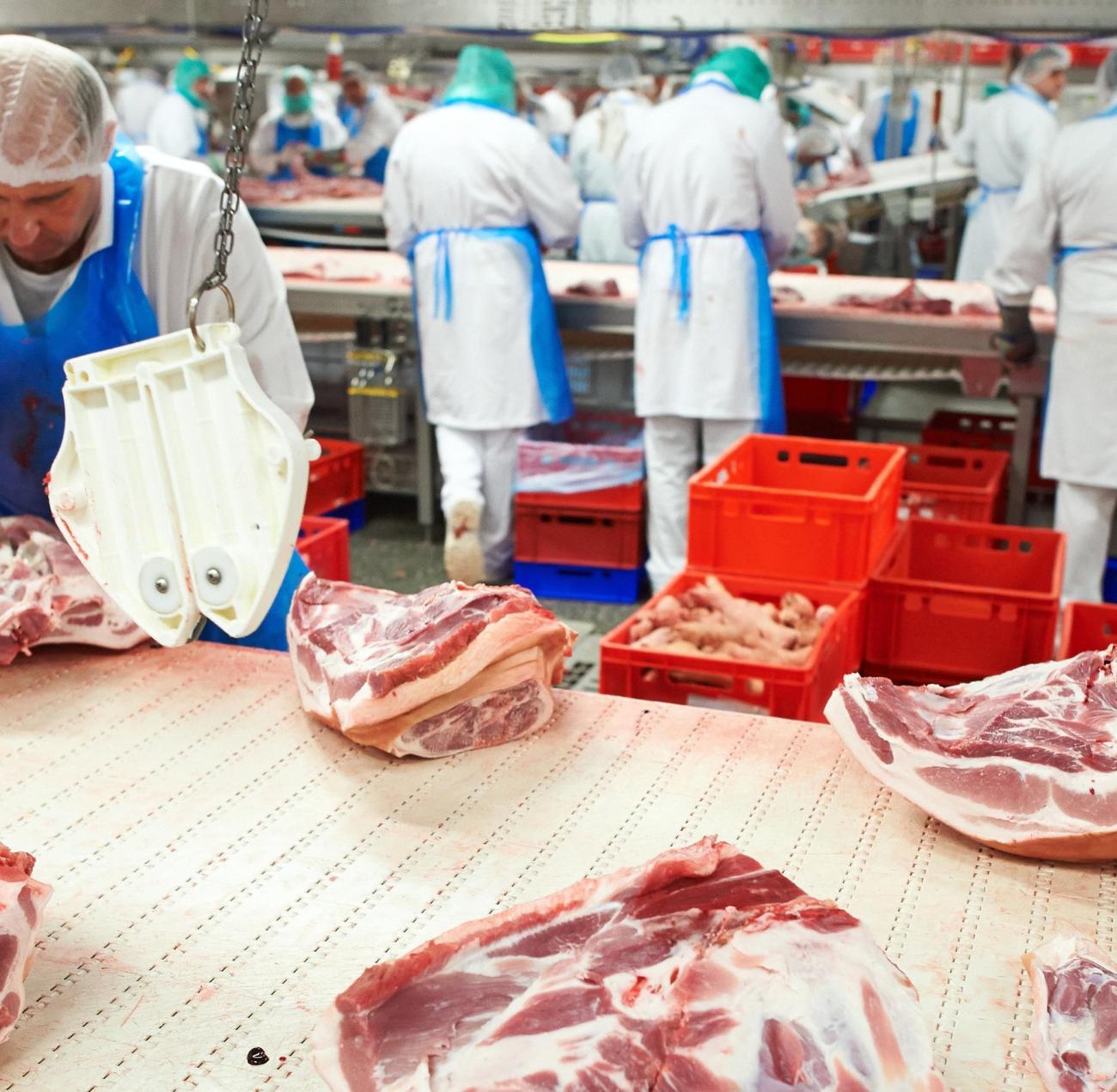 schlachtet mehr tiere als jemals zuvor