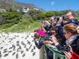 Pinguin Fotografen