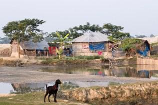 Sundarbarns Bangladesch_20141222_9932