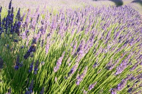 Provence_20150611_1890