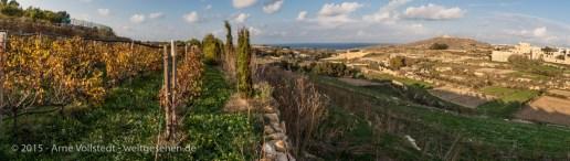 Gozo - Wein und Aussicht
