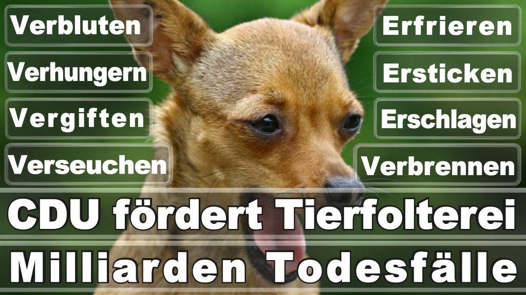 Angela Merkel CDU Tierversuche Tierquälerei Hauptschule Realschule Grundschule Gymnasium (1)