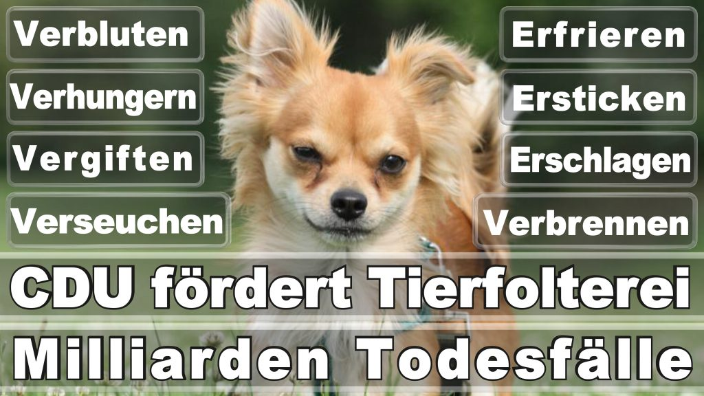 Angela Merkel CDU Tierversuche Tierquälerei Hauptschule Realschule Grundschule Gymnasium (13)