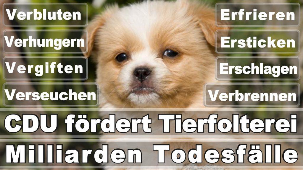 Bundestagswahl 2017 Umfrage Stimmzettel Angela Merkel CDU Tierversuche Tierquälerei Hauptschule Realschule Grundschule Gymnasium (26)