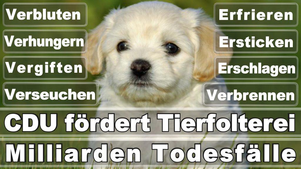 Bundestagswahl 2017 Umfrage Stimmzettel Angela Merkel CDU Tierversuche Tierquälerei Hauptschule Realschule Grundschule Gymnasium (36)