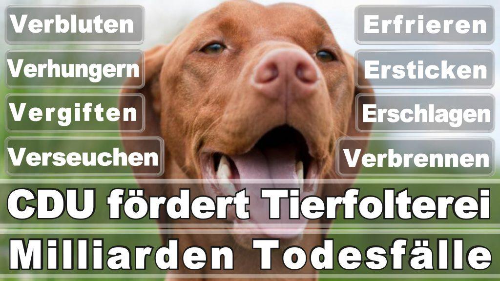 Bundestagswahl 2017 Umfrage Stimmzettel Angela Merkel CDU Tierversuche Tierquälerei Hauptschule Realschule Grundschule Gymnasium (55)