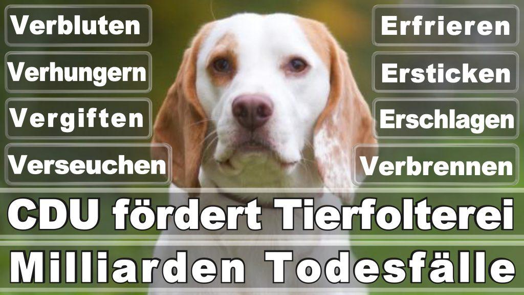 Bundestagswahl, 2017, Umfrage, Stimmzettel, Angela Merkel CDU Tierversuche Tierquälerei Hauptschule Realschule Grundschule Gymnasium (57)