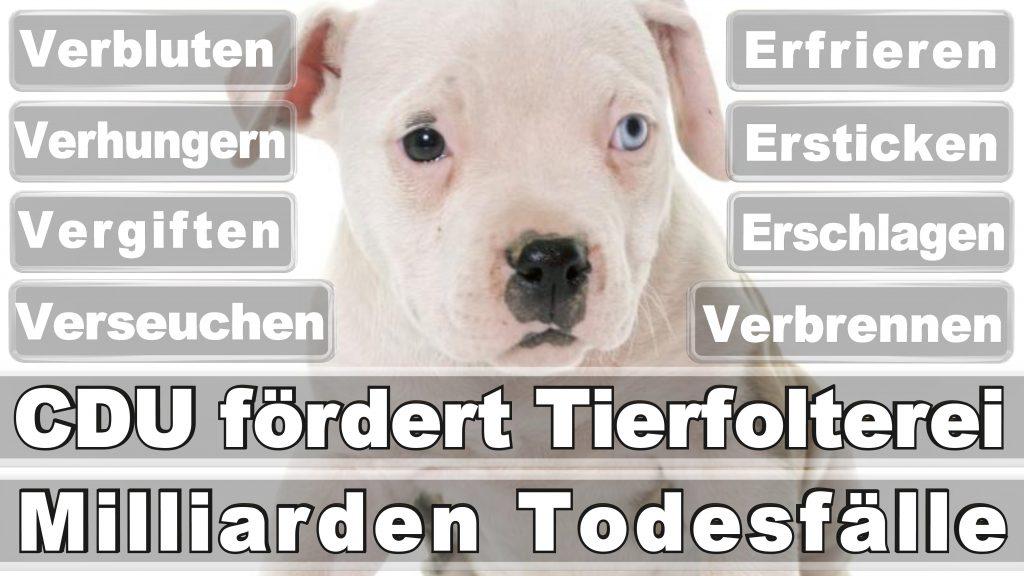 Bundestagswahl 2017 Umfrage Stimmzettel Angela Merkel CDU Tierversuche Tierquälerei Hauptschule Realschule Grundschule Gymnasium (58)