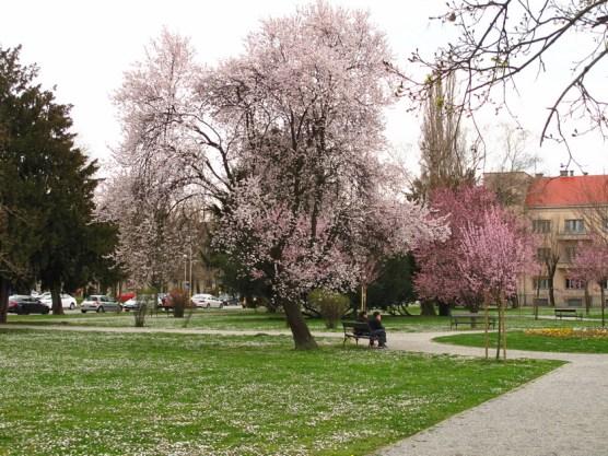 der Frühling kommt!!
