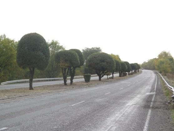 über 50 km Einfahrtsstraße werden die vorhandenen Bäume und Sträucher beschnitten!