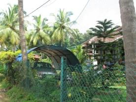 Überdachte Stellplätze- wegen der Kokosnüsse!