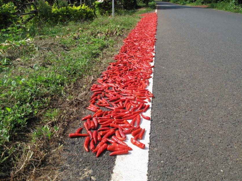 Peperoni zum Trocknen am Straßenrand