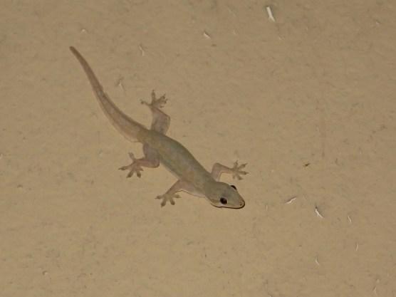 Gehört auch zur Grundausstattung im Hotelzimmer: Gecko