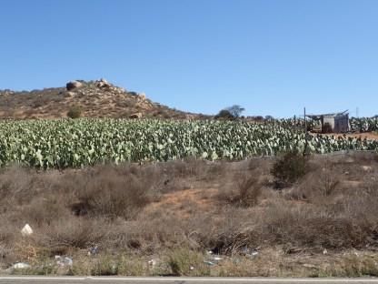 Plantagenanbau