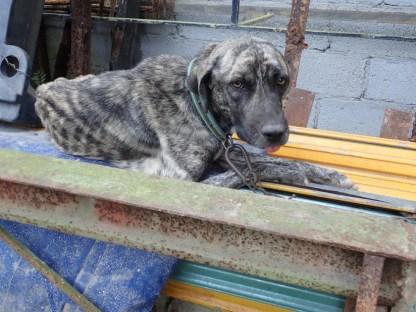 der traurigste Hund der Welt