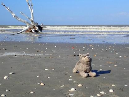 Lupi am Golf von Mexico
