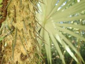wehrhafte Palme
