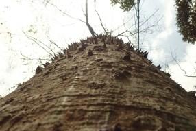 wehrhafter Baum