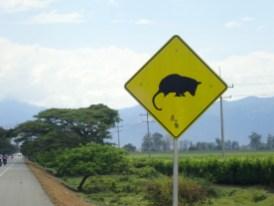 Kaum sieht man das Schild, sucht man die Tierchen