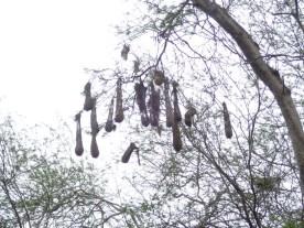 verlassene Nester