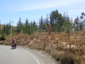 überraschende Forstprojekte