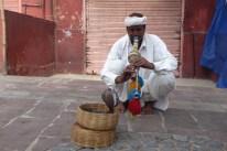 Indien_Jaipur_Schlangenmann