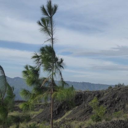 Bali-Batur-Lava