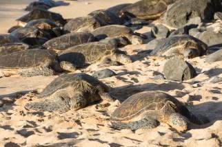 Hookipa Beach Park - Schildkröten 003
