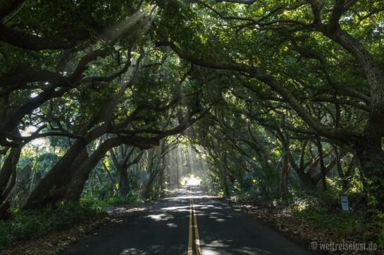 Big Island - Tropischer Regenwald
