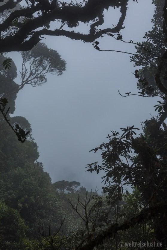 In der Tour enthalten: eine kurze Wanderung durch einen Urwald. Leider wurde hier das Wetter schon schlecht, sodass man nicht viel sehen konnte.