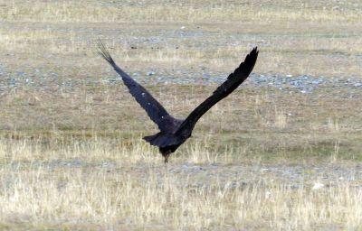 weltreise-zentral-mongolei-0246