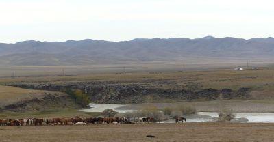 weltreise-zentral-mongolei-0402