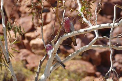 weltreise nocker australien - Millstream National Park_198