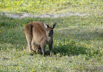 weltreise nocker australien - Region Margaret River_138
