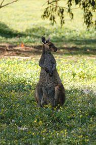 weltreise nocker australien - Region Margaret River_141