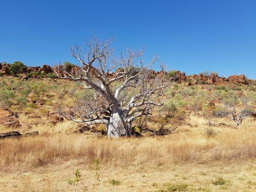 Australien – Gregory National Park