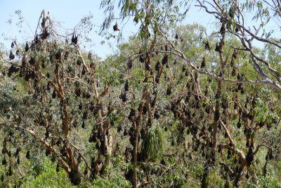 weltreise nocker australien - nitmiluk national park, katherine_106