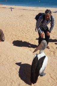weltreise nocker australien - shark bay_194