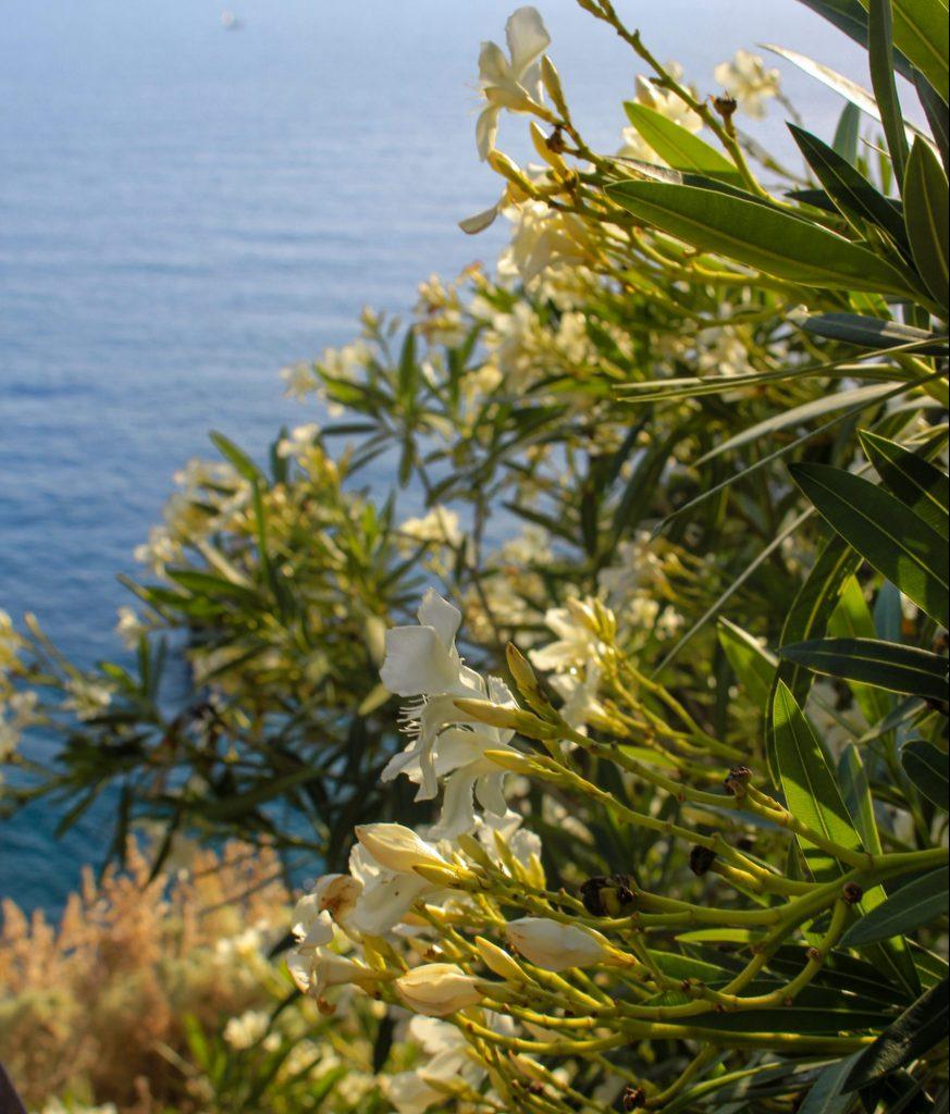 Weiße Blumen am Meer